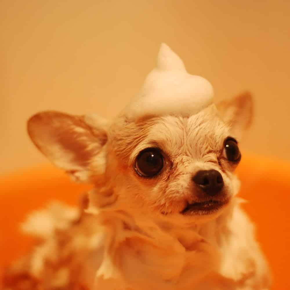 hair skin pet shampoo